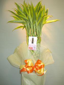 観葉植物の画像